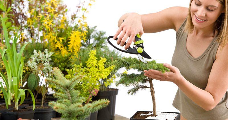 Уход за растениями: температурный режим